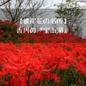 【彼岸花の名所】香川の『宝山湖』で山の斜面が真っ赤に染まる