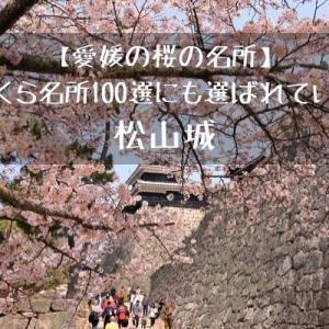 【愛媛の桜の名所】さくら名所100選にも選ばれている松山城