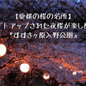 【愛媛の桜の名所】ライトアップされた夜桜が楽しめる『すすきヶ原入野公園』