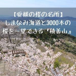 【愛媛の桜の名所】しまなみ海道と3000本の桜を一望できる『積善山』