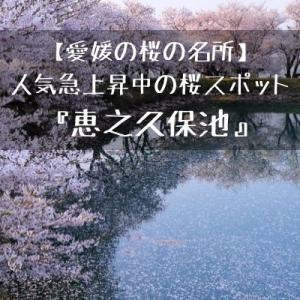 【愛媛の桜の名所】人気急上昇中の桜スポット『恵之久保池』