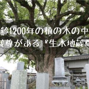 【観音寺】樹齢1200年の生きた楠の木の中に地蔵尊がある『生木地蔵尊』