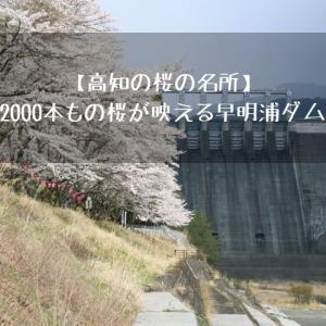 【高知の桜の名所】2000本もの桜が映える早明浦ダム