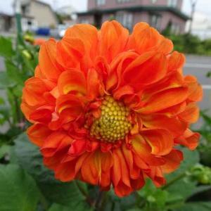 突然カメラが壊れました。(´;ω;`)「2019道端に咲いている花達。3」