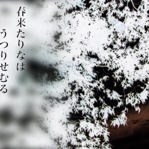 長編小説「春来たりなばうつりせしむる」第二話 ~阿久戸妙の陣~(最終話でオチあり)