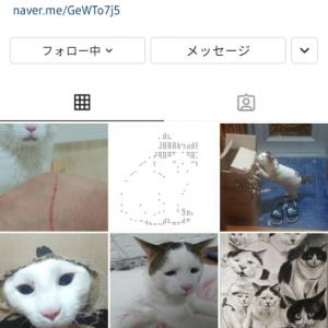 【インスタ】しょぼしょぼ顔の猫ちゃん!