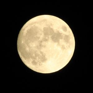 【満月】自信と誇りを持って今いる場所で最大限に命を輝かせる
