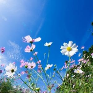 【満月】豊穣の満月ブルームーン~たくさん感謝を見つけて満ち足りた心を感じよう