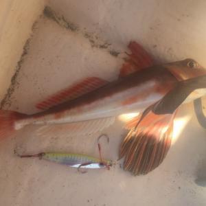 釣果写真#20 『凄く釣れるルアー』