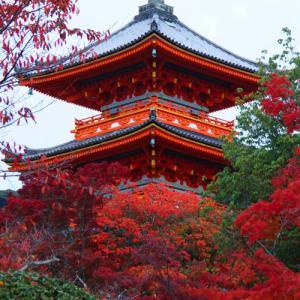 京都ぶらり旅「夜間拝観の紅葉を見に行ってきました」