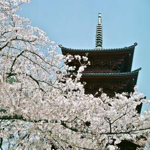 中山法華経寺の春・beautyflex 2.8 w/ fuji pro 160 ns