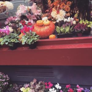 秋の素敵パリ