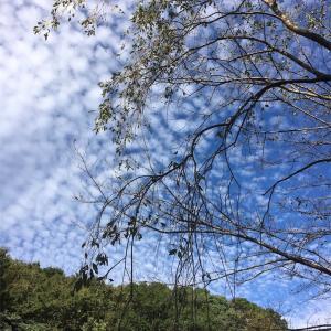 秋刀魚のコンフィと蕎麦粉のガレットそして秋の空