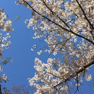 春真っ盛り!そして素敵なお土産