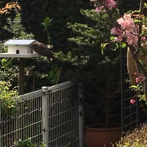 可愛い野鳥の訪問と今月のフレンドシップ