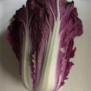 紫奏子/紫白菜で作ってみたシューマイとクラクフのハンバーガー屋さん