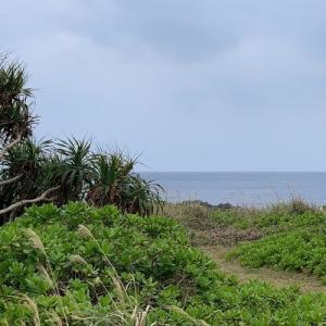 2020年2月 真冬の沖縄本島(3) 2020年2月8日 北部