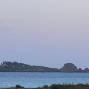 公開中 沖縄本島北部秋ログ(6) 2020年10月20日(火) ゴリラチョップ