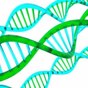 ◆がん治療遺伝子「運び役」◆