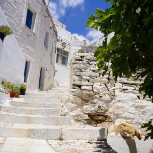 ギリシャ・シロス島の村、アノシロスぶらぶらオンラインツアー