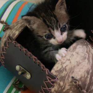 バッグには子猫。
