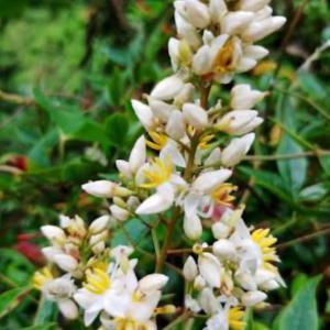 俳句:季語南天の花