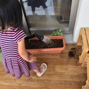 新1年生は植物を植えよう!観察しよう!