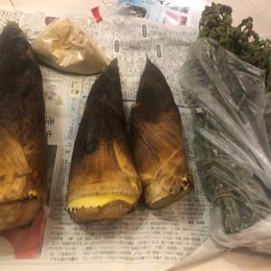 タケノコとわらびを食す。