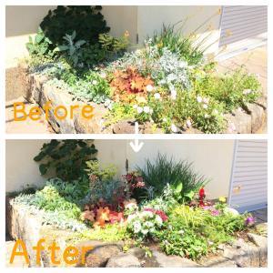 夏花壇への植え替え
