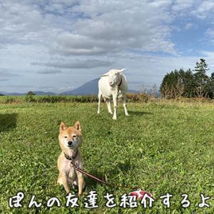 ぽんちゃんと新しい友達