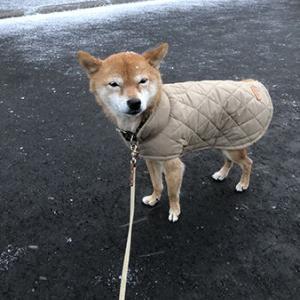 札幌、急転直下の冬