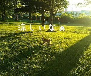 【悲報】北海道、夏が終わる。