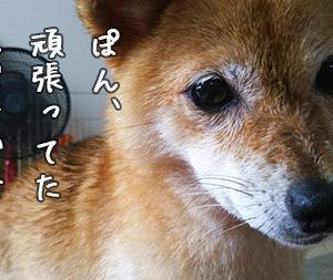 歯周病、再び…犬のオーラルケアは…?