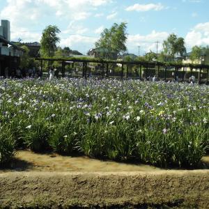 6月に咲く花