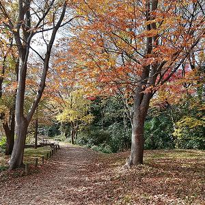 水元公園、舎人公園