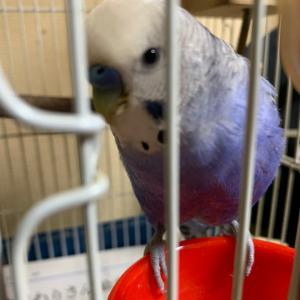 インコのTail二世:それが鳥臭いってことなんでしょうか?
