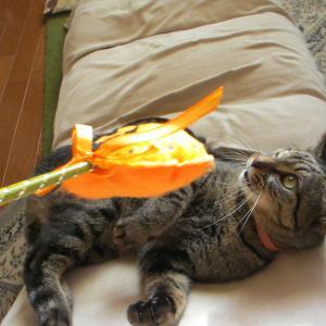 猫の心と秋の空
