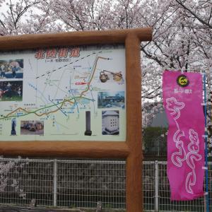 松任総合運動公園と北陸街道の桜