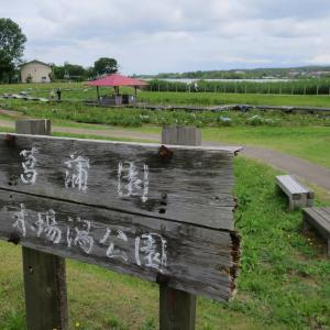 木場潟の菖蒲園はちょっと残念な状態でした