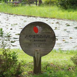 公園自体がちょっと心配な十二町潟水郷公園
