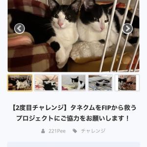 飼い猫が2頭ともFIPに!
