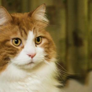 よく鳴く猫が最期の挨拶の時無言で望んだこと。猫から学んだ人の生き方