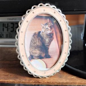 飼い猫のひたむきな愛、本当に私の事を好きでいてくれた
