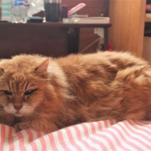 ソファーで爪とぐのが好きな猫のために買ったのは