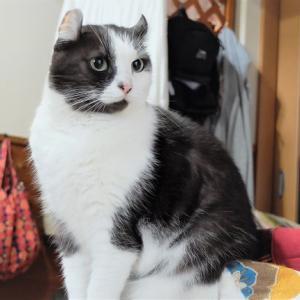 ペットショップで売れ残りの猫でした