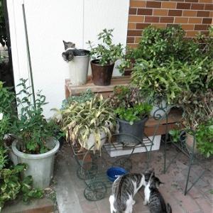 子猫の鉢植え