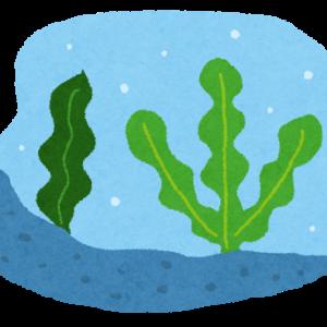 海藻類は白髪に効果はあるの?その真実と白髪対策メニュー