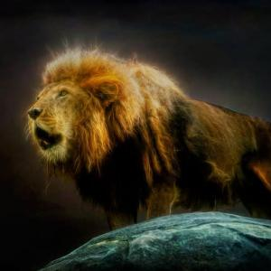 8月8日のライオンズゲート