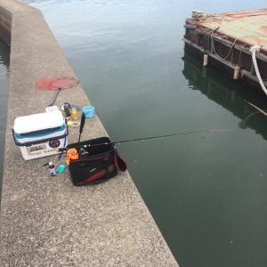 常滑   堤防かかり釣り