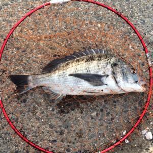 フカセ釣り始動第二弾